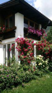 Haus mit vielen Rosen